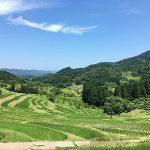 大山千枚田の絶景ポイント